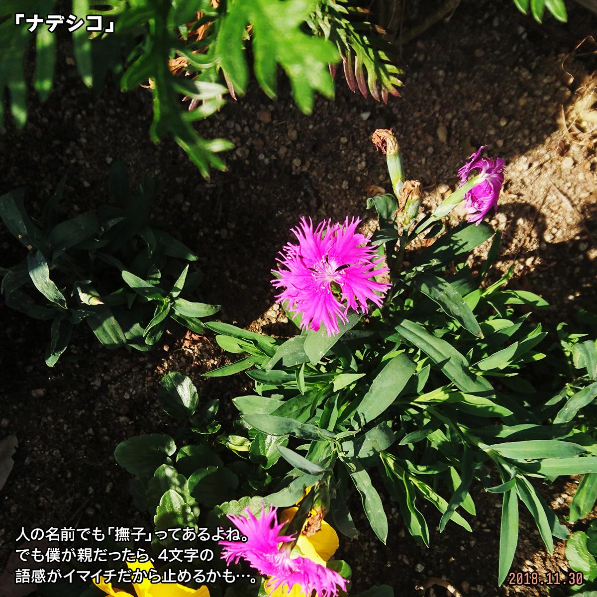 DSC_8708.jpg
