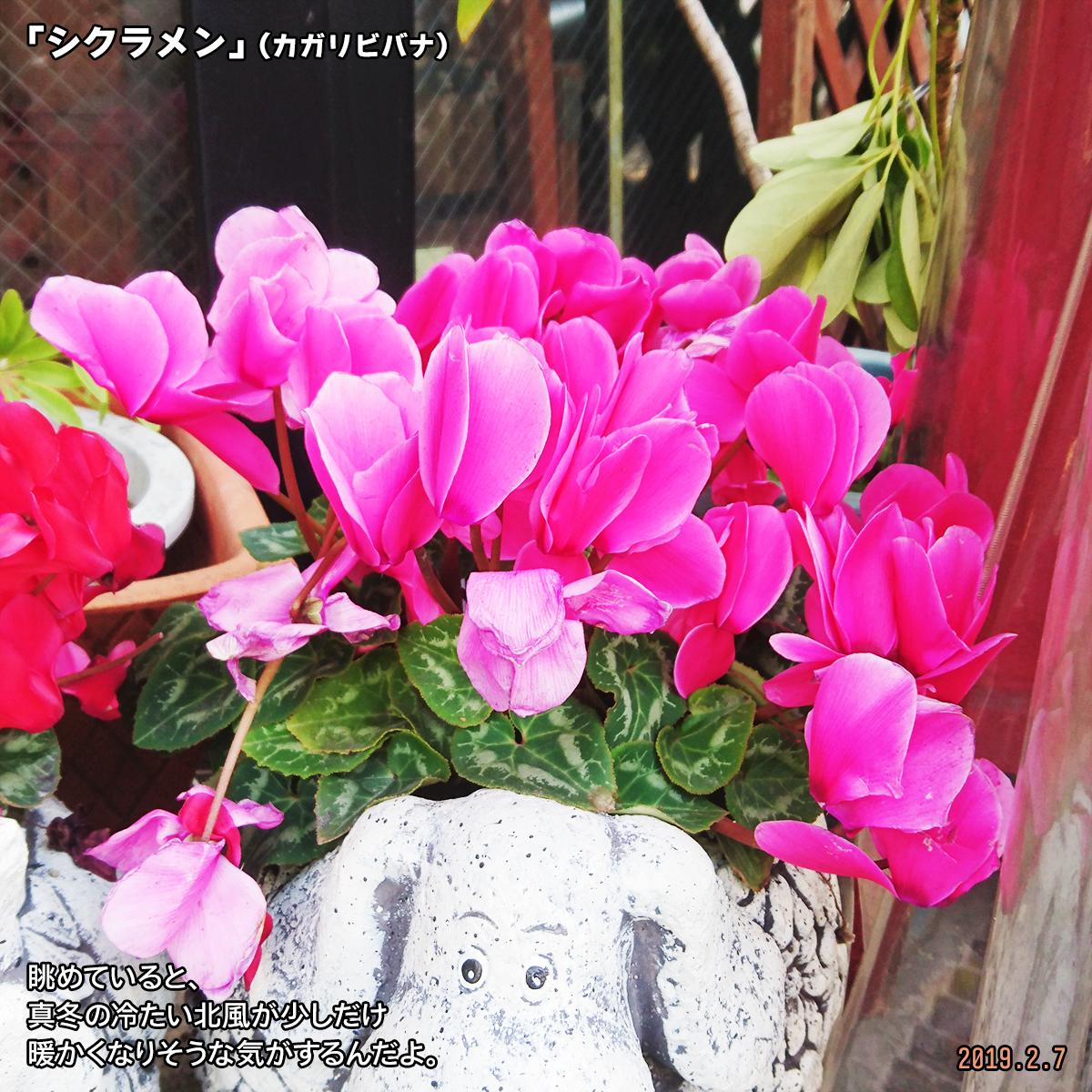 DSC_9602.jpg