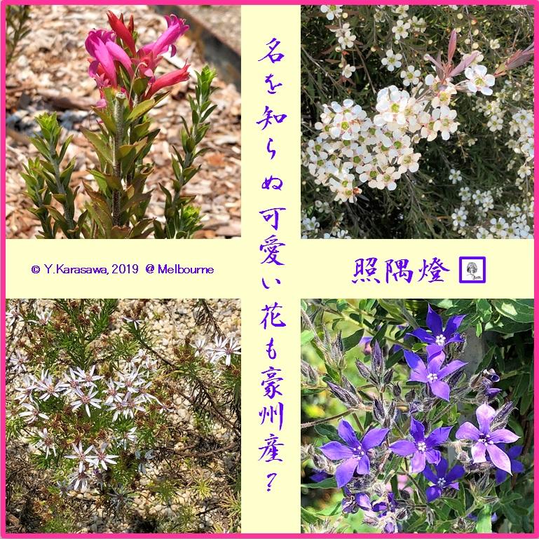 190223不明の花1LRG