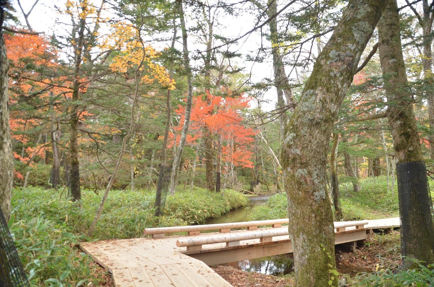 mDSC_0312木道からの紅葉