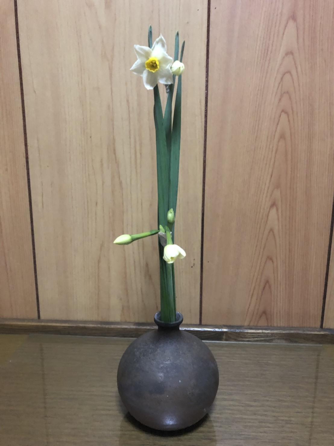 水仙S__6111238