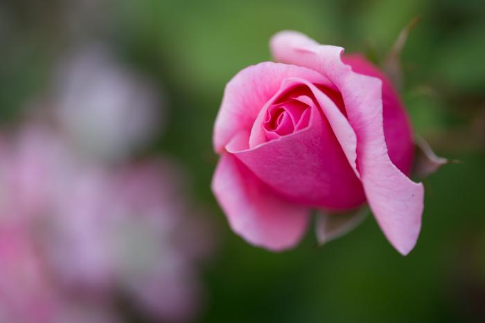 rosey20181021-1688.jpg
