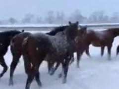 20181123 初雪のレイクヴィラファーム^^;