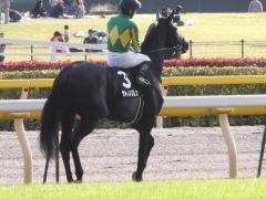 20121020 東京9R いちょうステークス サトノノブレス 04
