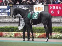 20121117 東京11R 東京スポーツ2歳S (G3) サトノノブレス 02