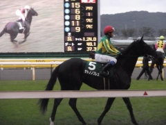20121117 東京11R 東京スポーツ2歳S (G3) サトノノブレス 04