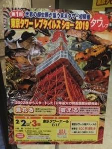 東京タワーレプタイルズショー_(2)_convert_20190203224850