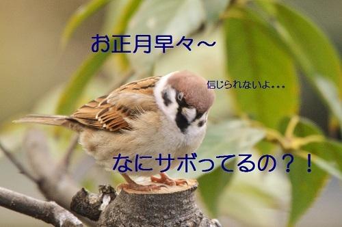 020_20190104224457311.jpg
