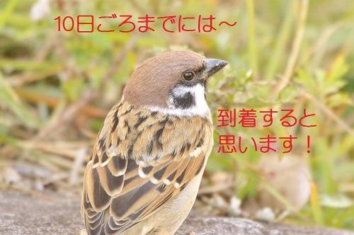 040_20181205010016324.jpg
