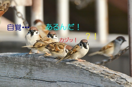 040_20190227193842a5c.jpg