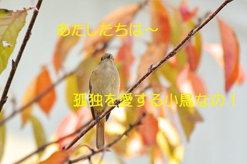 090_201811032256545ed.jpg
