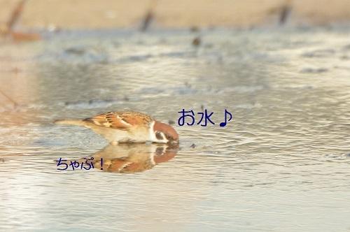 090_20190227193850ddb.jpg