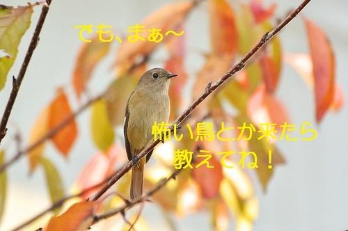 110_20181103225657fa1.jpg