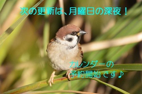 130_20181103225700ba1.jpg