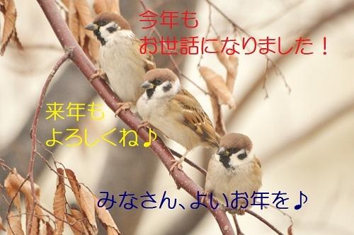 130_201812302210497da.jpg