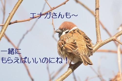 150_20190126200622b63.jpg