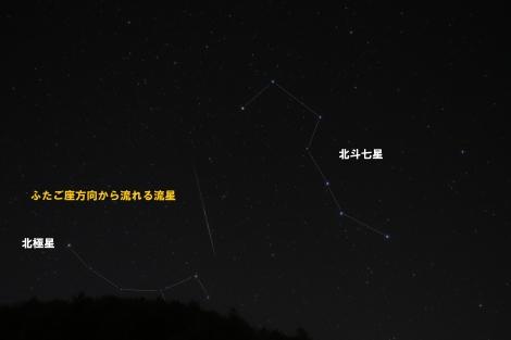 WR1A4884fig2_ryusei_ooguma_koguma.jpg