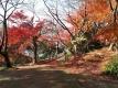高岡城址公園の紅葉