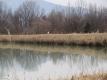 ため池のシラサギ