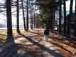 長野牧場のカラマツ並木