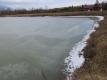 ため池の氷が解け始めた