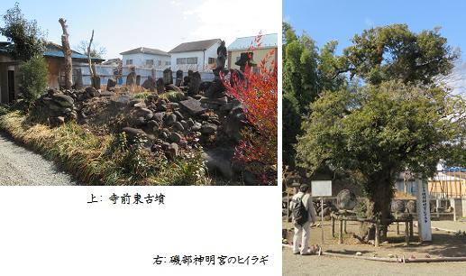 b0220-2 寺前古墳-ヒイラギ