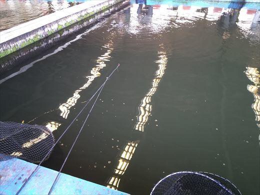 中の島釣り堀 (8)