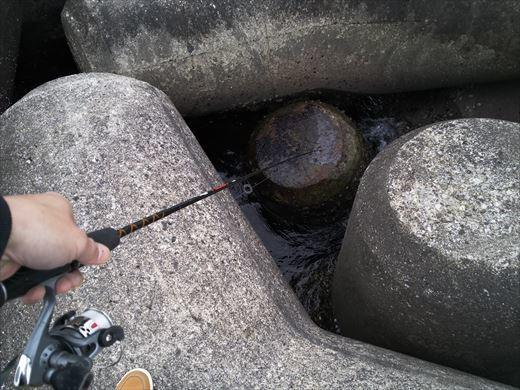 伊東で釣り (22)