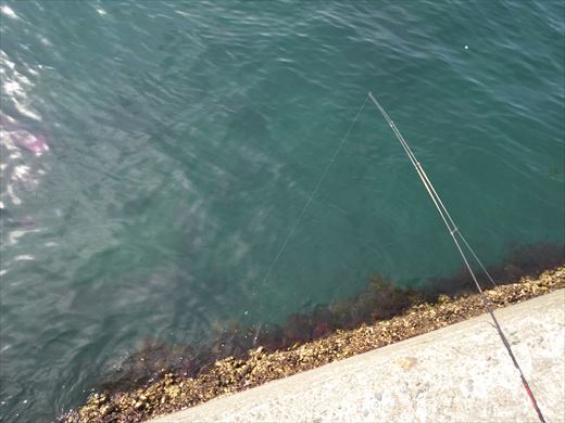 白灯台堤防で釣り (13)