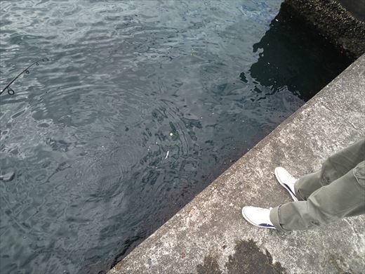 白灯台堤防で釣り (15)