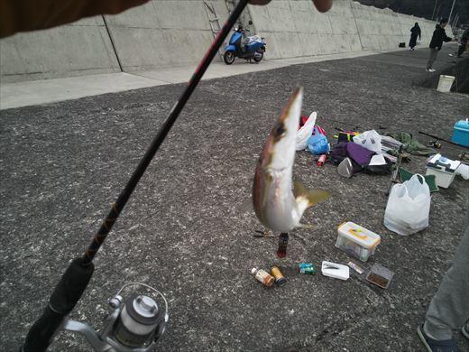 白灯台堤防で釣り (25)