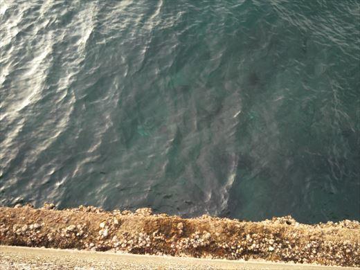 荒崎の海で釣ってみる (17)