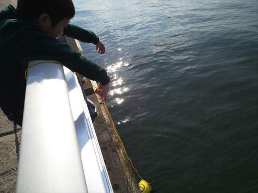 検見川堤防 (13)