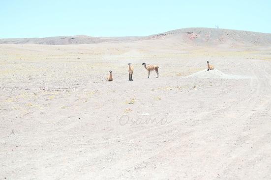 18-11-27_atakama-chile-0002.jpg