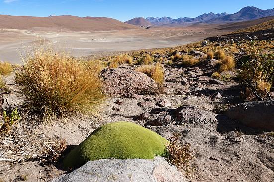18-11-29_atakama-chile-0248.jpg
