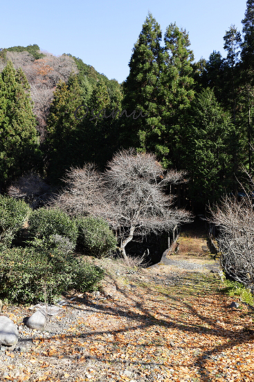 18-12-20_shinobuyama-gnma-0005.jpg