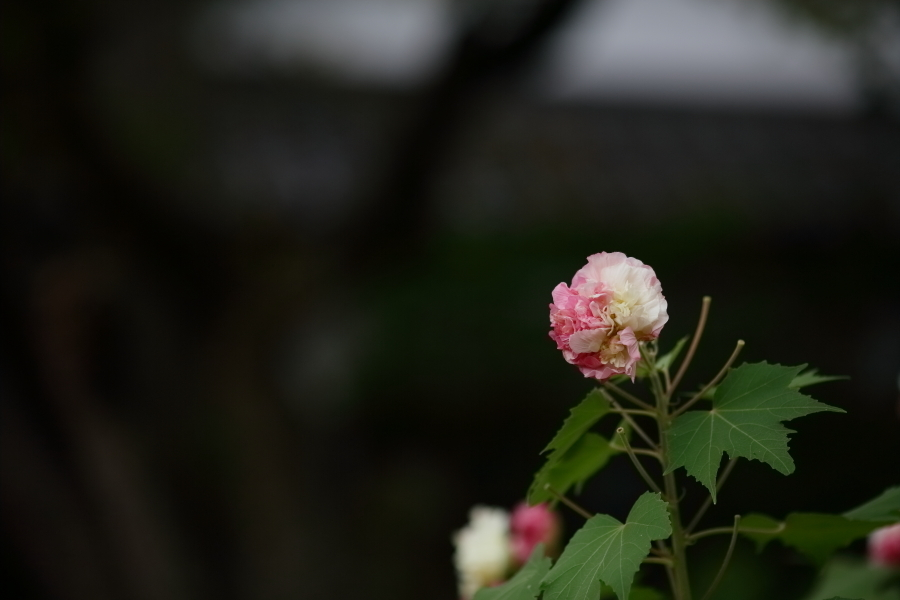 DPP_36338.jpg