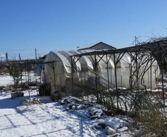 ビニールハウス(雪の朝)