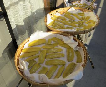 巨大イモの干芋乾燥