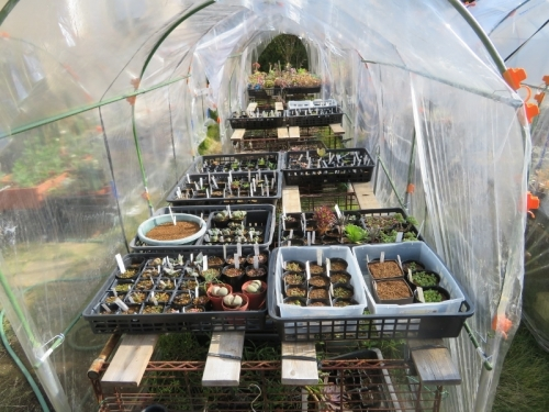 サボテン多肉植物実生苗、簡易ビニールハウスで霜下期まで防寒対策~2018.11.27