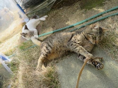 遊んでいる近所の野良子猫たち♪2019.01.23