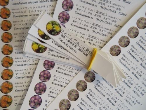 コノフィツムの名札作成~レーザーカラープリンターとPET用紙2019.02.04