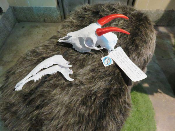 ここでは3Dプリンタで出力された骨格標本に触れることができる。写真はニホンカモシカの頭。