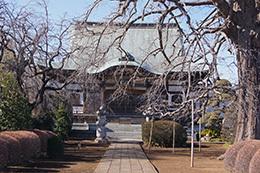 190202円蔵院の大イチョウ⑥