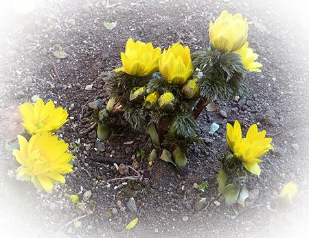 0215庭の春