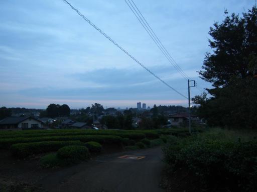 20181015・にゃーにゃー散歩06