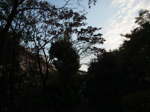 20181018・狭山湖撮影2-19・18日6時39分