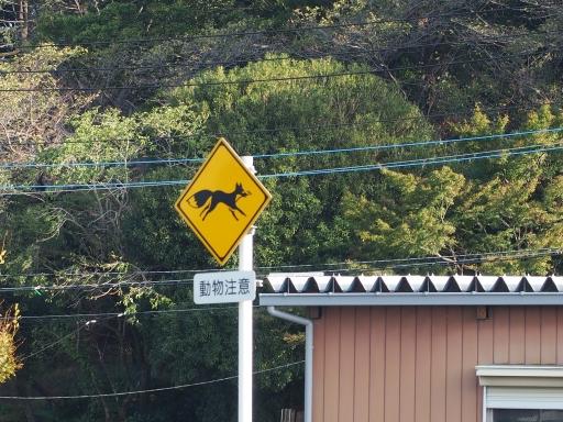 20181020・狭山湖箱根ヶ崎ネオン11・瑞穂町に狐がいる
