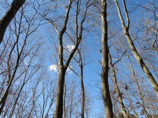 森の響0001