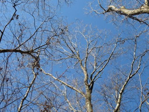 森の響0001_4